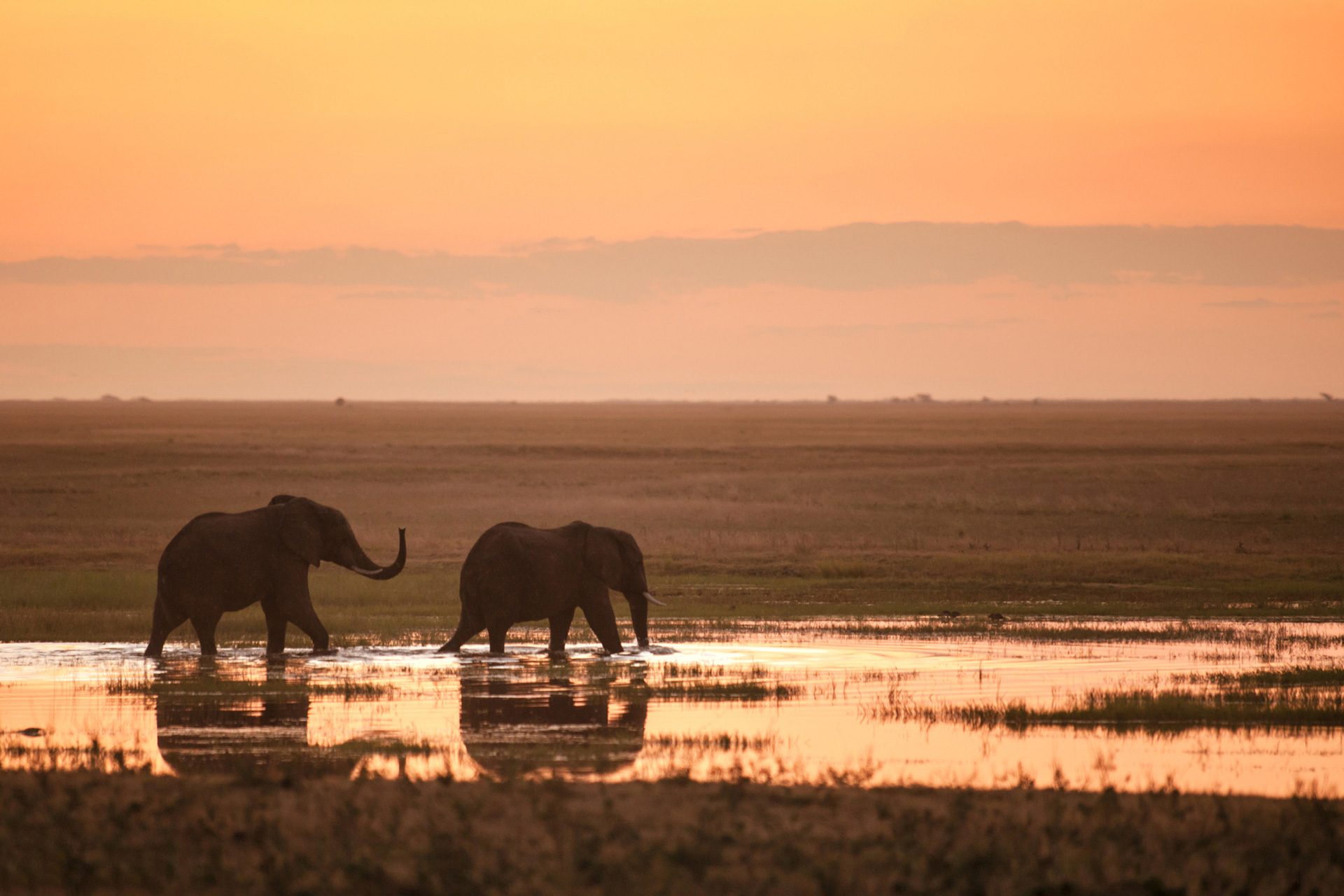 Image of elephants in the sunset